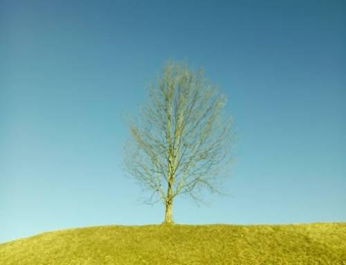 Haiku vom Baum