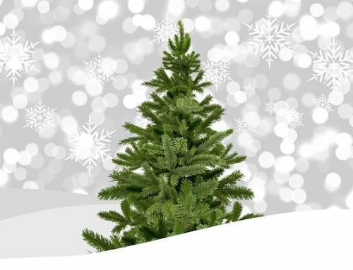 Weihnachtsbaum sharing